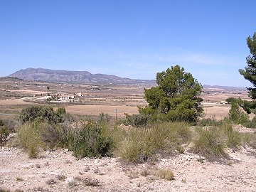 Building land in Pinoso