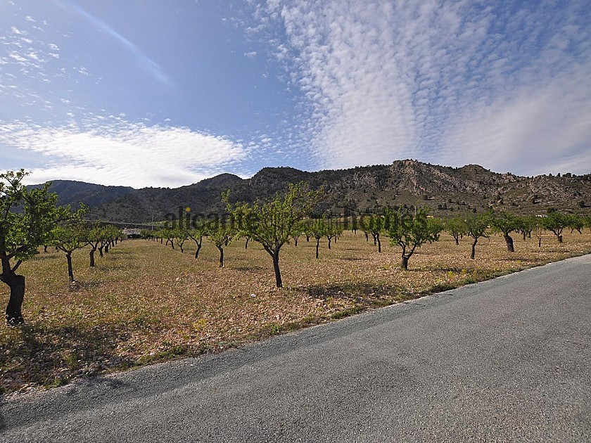 Legal Building Plot with mains water and electric in Salinas close to Sax in Alicante Dream Homes