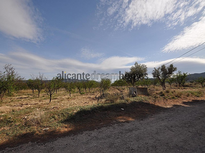 Large building plot, Walking distance to Salinas Near Sax in Alicante Dream Homes
